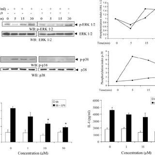 Pyk2 regulates LPS-induced IL-8 expression through the p38