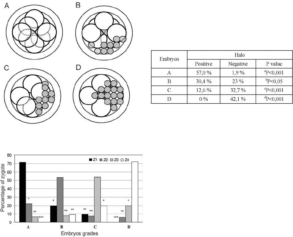 Pronuclear scoring as a predictor of embryo quality in in