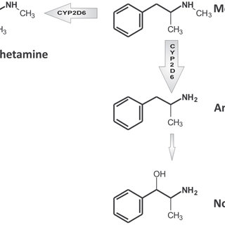 Simplified scheme of methamphetamine main metabolic