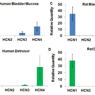 Characterization Of The Role Of Hcn Channels In 3