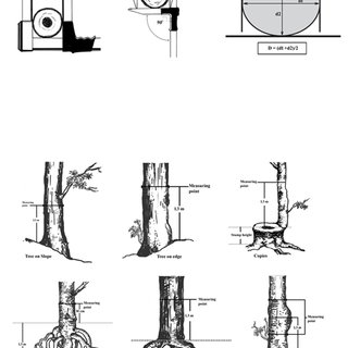 (PDF) MANUAL FOR BUILDING TREE VOLUME AND BIOMASS