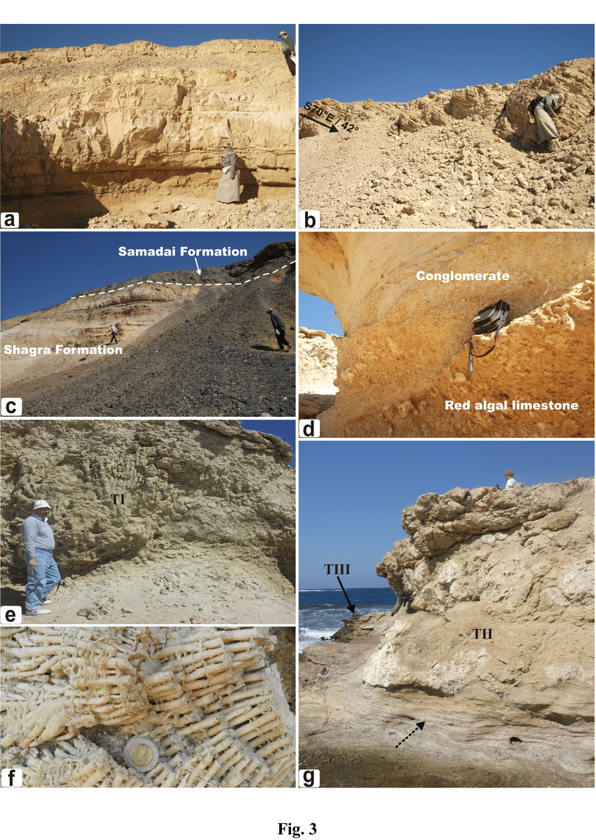 medium resolution of lithology and field relations of the studied rock units a fossiliferous oolitic limestone intercalating