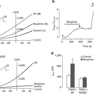 (PDF) Activation of TREK-1 by morphine results in