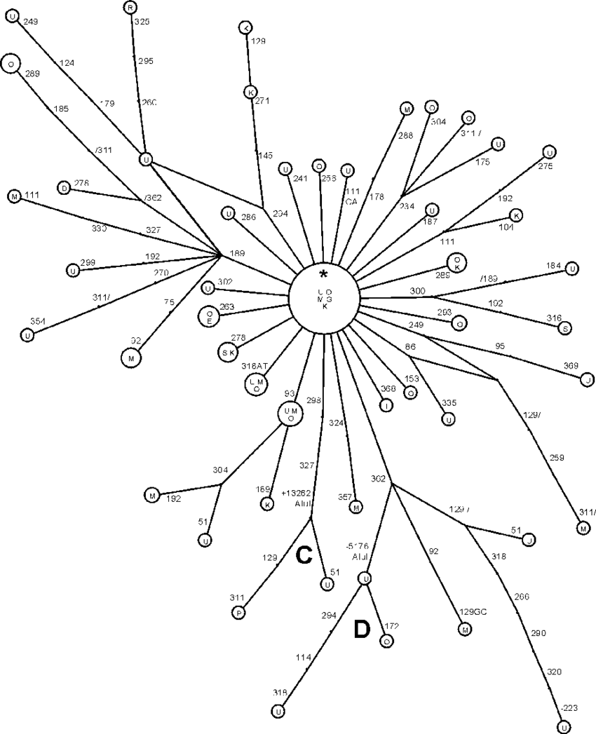 Reconstruction of the M* lineages in India. Populations: U