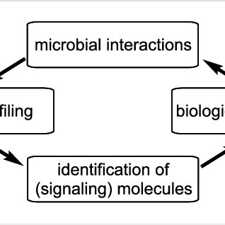 (PDF) Natural products from microbes associated with insects