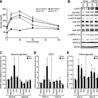Generation of Liver-Specific Scd1 Knockout Mice (A) Scheme