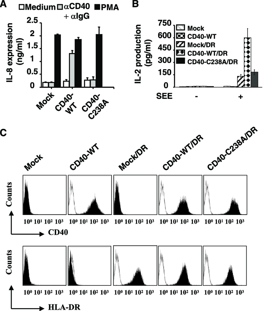 Cys238-mediated dl-CD40 is required for CD40-mediated