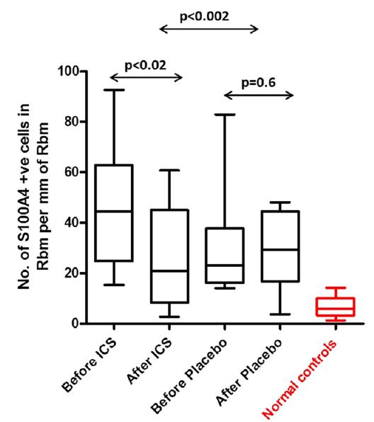 S100A4 expression in Reticular basement membrane (Rbm
