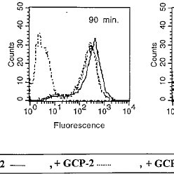 GCP-2–induced downmodulation of CXCR1 and CXCR2 expression