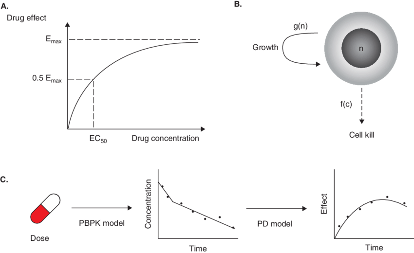 A. An E max PD model describes the effect of a drug based