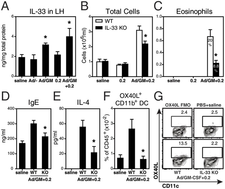 (A) IL-33 by ELISA in lung homogenates of WT mice at day 8