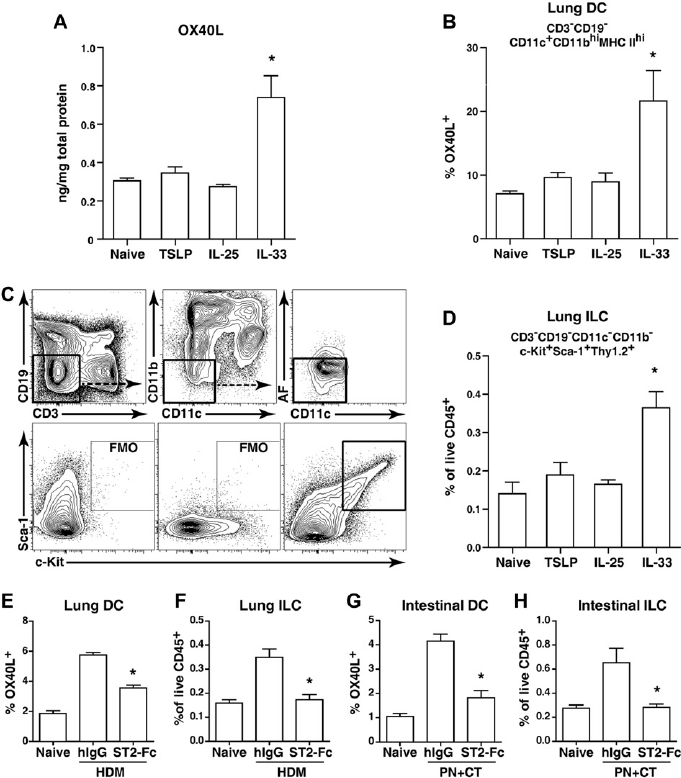 HDM and peanut (PN) induce DC OX40L and ILCs in vivo