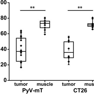 Assessment of [18F]FAZA tumor-to-muscle ratios in CT26