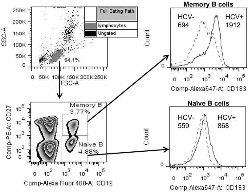 Gating strategy for flow cytometry analysis of memory and