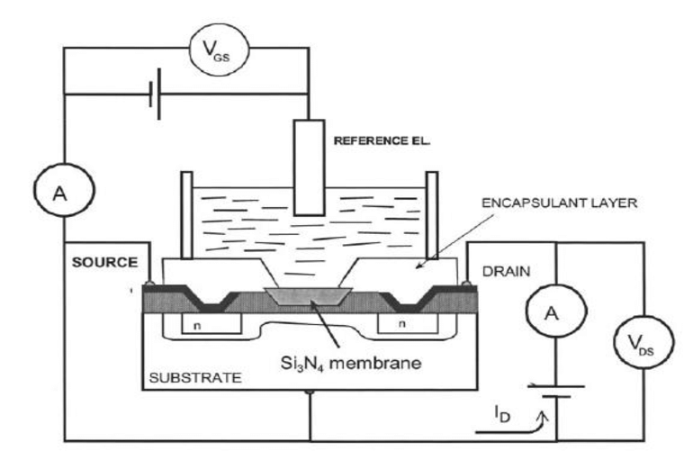 Scheme of the ISFET mechanism of response and the
