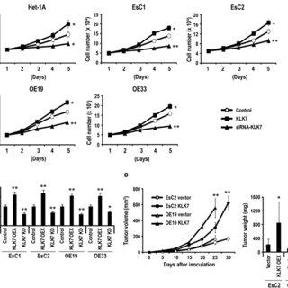 (PDF) Cigarette Smoke Mediates Epigenetic Repression of