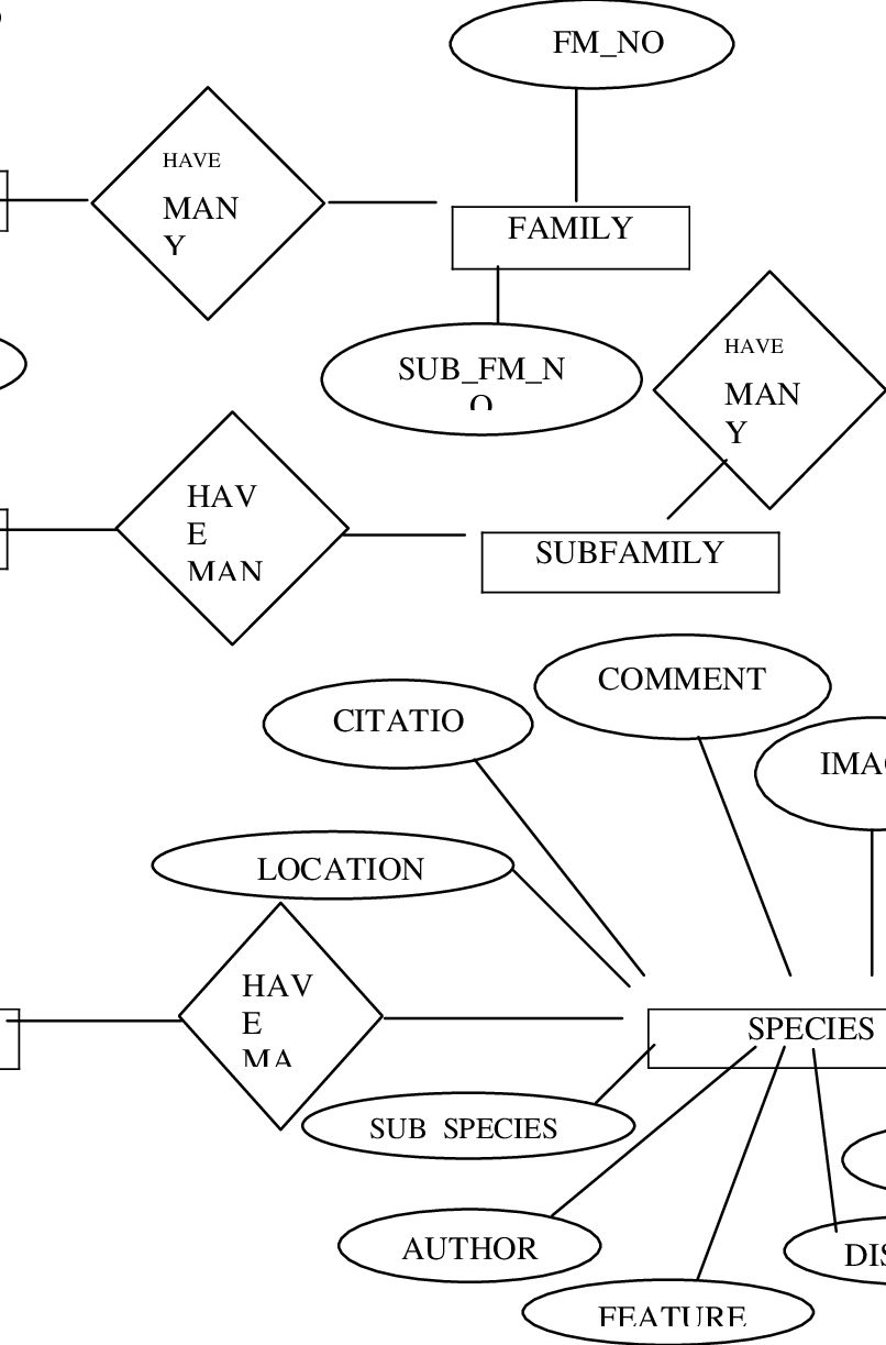 hight resolution of the design of the database based on the entity relationship diagram erd