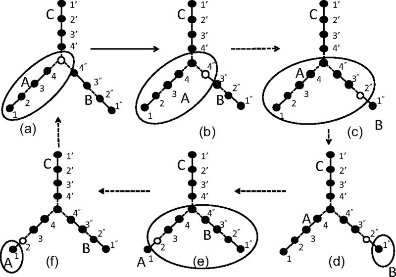 Schematic representation of finite DMRG steps. Sites of