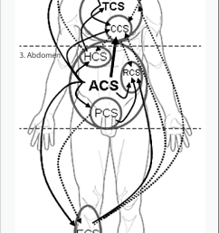 interactions between the four main body compartments head chest download scientific diagram [ 651 x 1287 Pixel ]