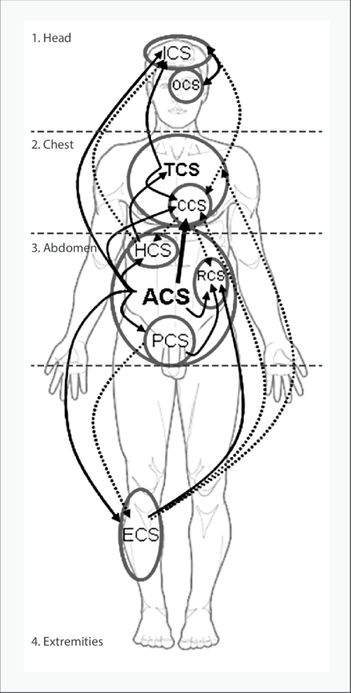 small resolution of interactions between the four main body compartments head chest download scientific diagram
