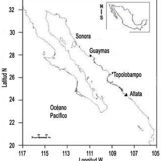 P. globosa, del sistema lagunar Altata, Navolato, Sinaloa