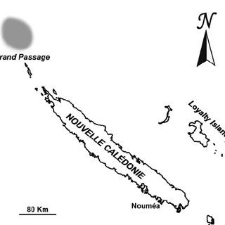 (PDF) A new Profundiconus from Northern New Caledonia