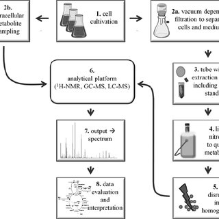 (PDF) Metabolome Analysis of Gram-Positive Bacteria such