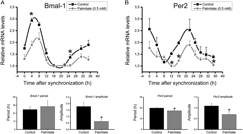 Rhythmic fluctuations in the mRNA levels of Bmal-1 (A) and