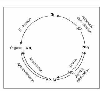 (PDF) Il processo di denitrificazione naturale nelle acque