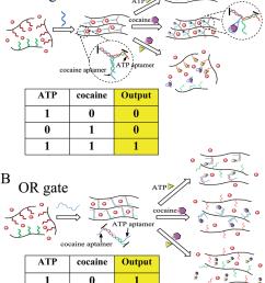 colorimetric logic gates based on aptamer crosslinked hydrogels a and gate and [ 850 x 1161 Pixel ]