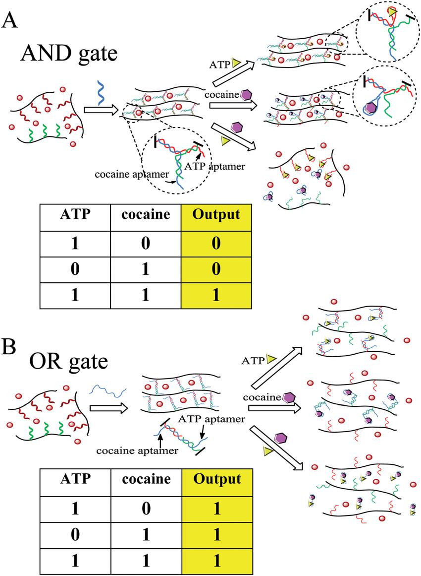 medium resolution of colorimetric logic gates based on aptamer crosslinked hydrogels a and gate and
