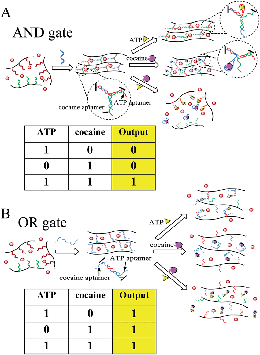 hight resolution of colorimetric logic gates based on aptamer crosslinked hydrogels a and gate and