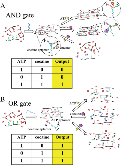 small resolution of colorimetric logic gates based on aptamer crosslinked hydrogels a and gate and