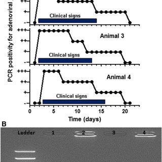 (PDF) Novel adenovirus detected in captive bottlenose