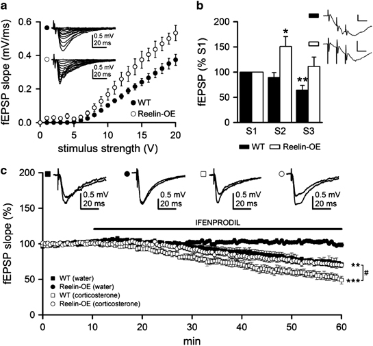 Reelin overexpression modifies synaptic activation of NMDA