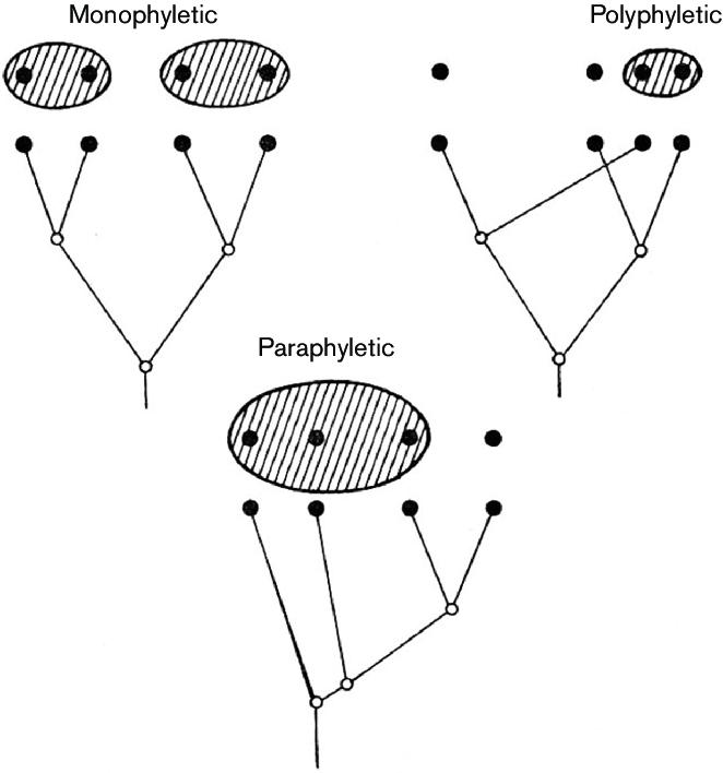 Mono Vs Poly Vs Paraphyletic