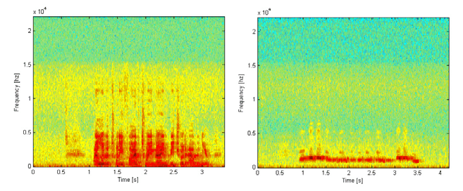 how to wolf whistle diagram stratocaster wiring 3 way switch spectrogram of a male voice fig