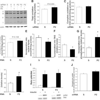 (PDF) Perilipin 2 Improves Insulin Sensitivity in Skeletal