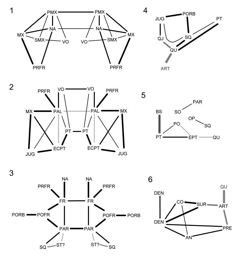 Joint relationships within Sphenodon. 1. rostral, 2