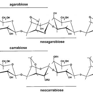 Basic chemical structure of A) agar and B) carrageenan and