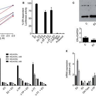 (PDF) Molecular and Biochemical Analysis of the Estrogenic