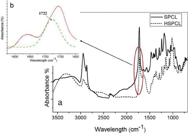 ATR-IR spectra of HSPCL (a) whole spectra, (b