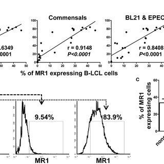 Cytokine production by MAIT cells stimulated with