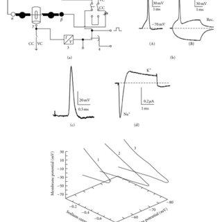 (PDF) Nervous System of Periplaneta americana Cockroach as