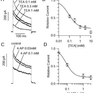 Pharmacology of dendritic potassium currents. A, Effects