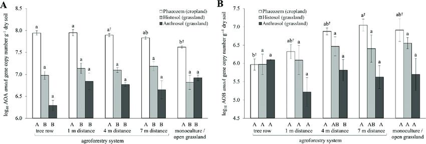 amoA gene abundances of (A) ammonia-oxidizing archaea (AOA