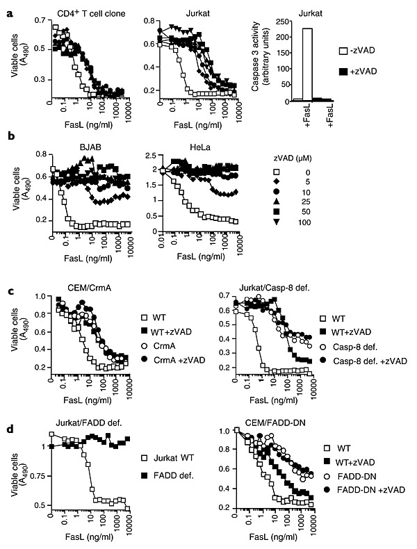FasL-mediated, caspase-independent cell death in T cells