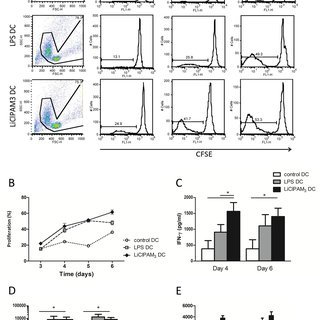 Co-culture of MSCs with MDBK cells through phase contrast