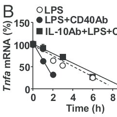 (PDF) T cells down-regulate macrophage TNF production by