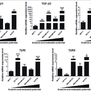 (PDF) TGF-1 modulates the homeostasis between MMPs and MMP